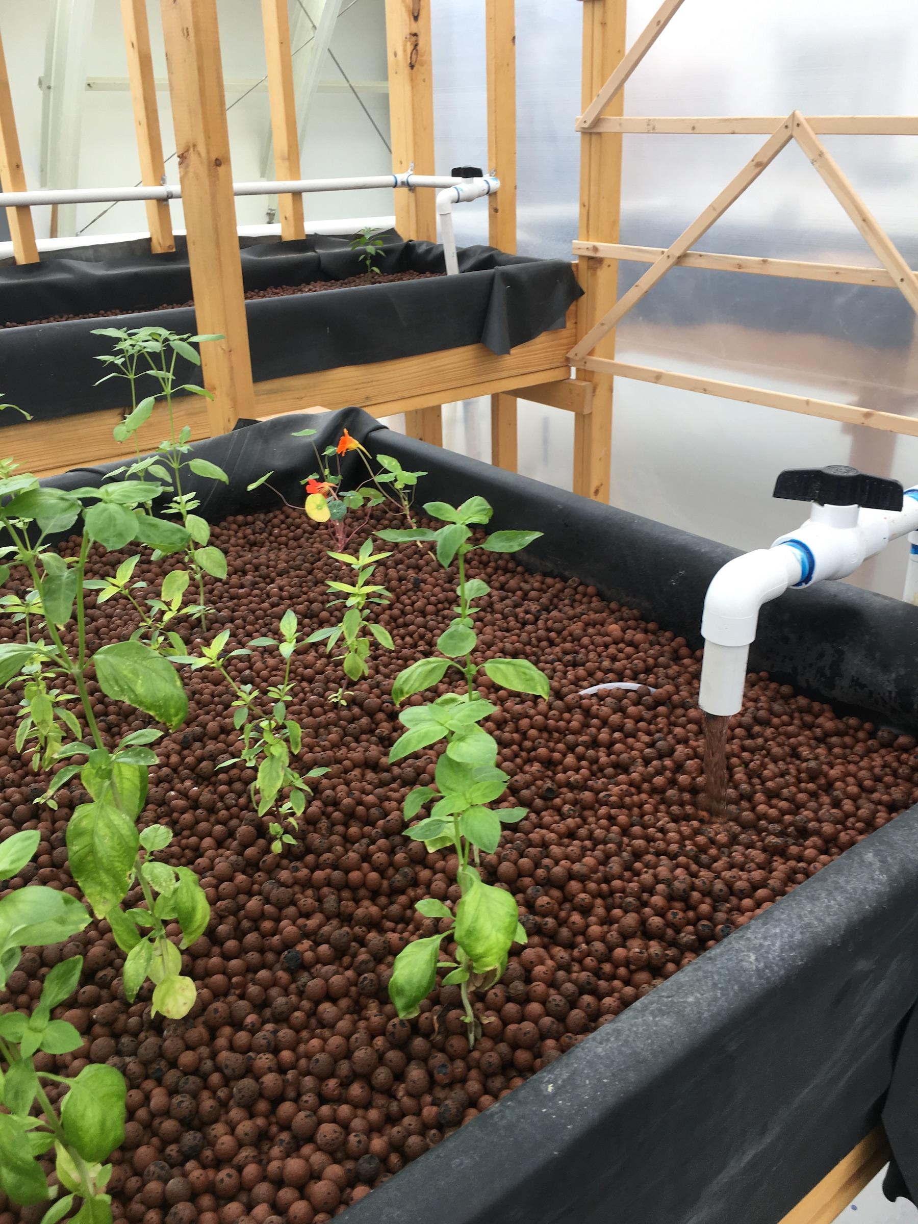 Tao Yuan Opens Aquaponics Greenhouse In Brunswick The
